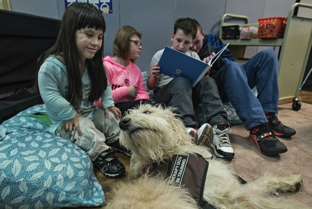 Quintana Varela, 14, of Woodstock, gives Duke some attention as her classmates read a story about Duke in their classroom at Peter Muhlenberg Middle School. Rich Cooley/Daily